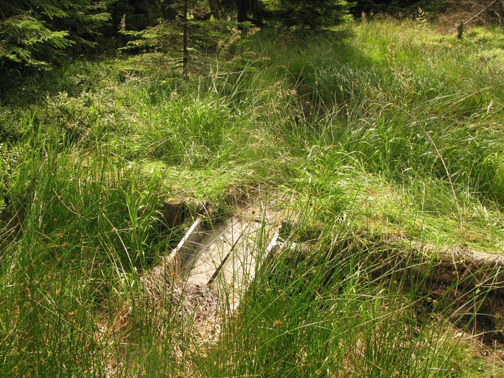 Cínovecká rašeliniště svou funkci plní dobře.