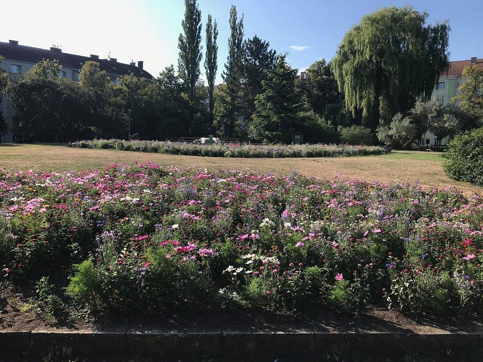 Květinová louka ve Vinařské ulici padla za oběť kancům