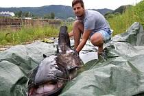 Mladý rybář Jiří Junek chytil obřího sumce, měřil více jak dva metry.