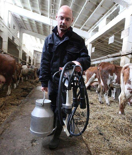 Patrně nějvětší zážitek byl při krmení telátek pomocí hliníkové bandasky s dudlíkem. Naopak nasazování dojící soupravy mezi stojícími kravami nebylo příjemné ani na okamžik.