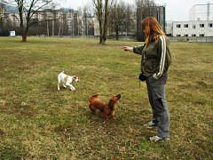 Psí louku chce radnice v Neštěmicích změnit v park.
