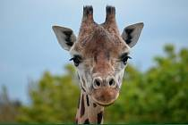 Ve čtvrtek do ústecké zoo Na skok do Afriky.