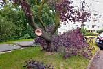 Částečně vyvrácený strom v ústecké ulici Jana Zajíce
