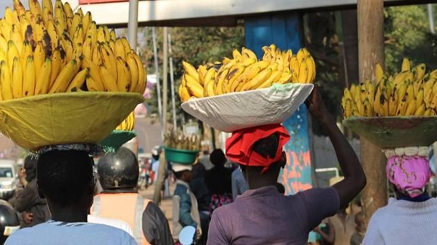 V sobotu opět míří do Ústí nad Labem Africké trhy s exotickým ovovcem.