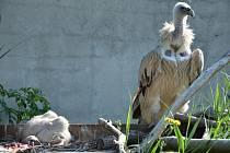 Supi v ústecké zoo