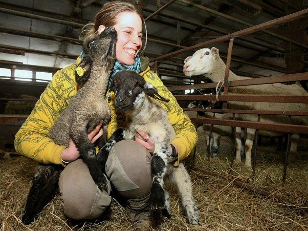 Pracovnice ekofarmy Anežka Svobodová s narozenými jehňaty.