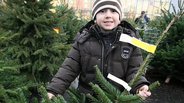 Prodej vánočních stromků začal i v Ústí nad Labem. Například u Baumaxu ve Všebořicích si vánoční strmky vybíral s mamninkou malý Josef Beren.