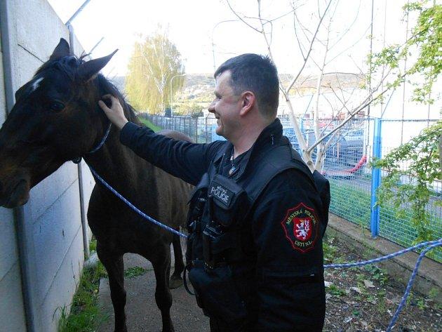 Koně odchytili strážníci.