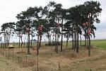 Lesík s beruškami na D8.