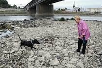Dlouhodobě trvající sucho se odrazilo i v množství vody v řece Labe. Tam, kde běžně bývá metr vody, nyní chodí obyvatelé Střekova venčit psy a rybáři chytají ryby přímo v plavební dráze.