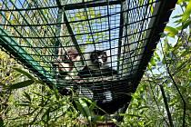 Ústecká zoo hlásí úspěšný odchov u vari černobílých.