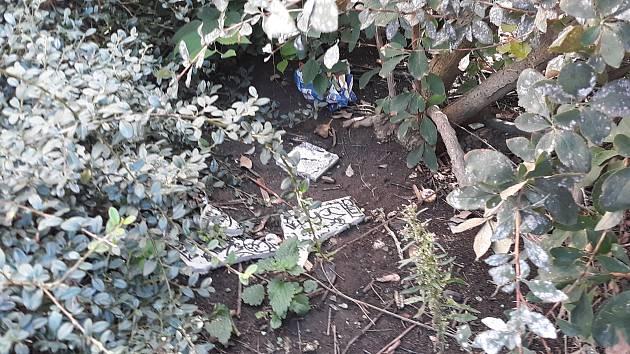Suché křoviny na Masarykově třídě ukrývají odpadky i potkany.