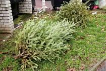 Vánoční stromky v Ústí nad Labem opět zamíří do kompostárny.