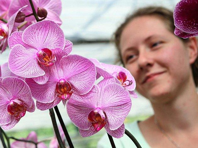 Na UJEPu začala výstava orchidejí.