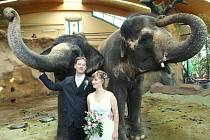 """Netradiční svatba v těsné blízkosti slonic se uskutečnila v ústecké zoologické zahradě. Své ANO si tam řekli svatebčané z Opavy. """"Snad nám sloni přinesou štěstí,"""" sdělil ženich Přemysl Plačka"""