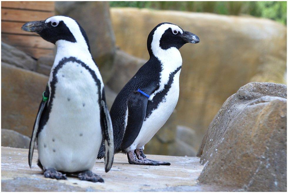 Návštěva ústecké zoo.