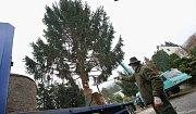 Ve středu 21. listopadu ráno byl pokácen v Mojžíři smrk ze soukromé zahrady, aby záhy skončil jako vánoční strom na Mírovém náměstí v Ústí nad Labem.