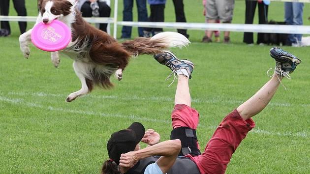 Majitelé psů se svými miláčky soutěžili na klíšském fotbalovém stadionu například v disciplíně zvané dogfrisbee.