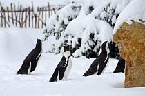 Zima v ústecké zoologické zahradě