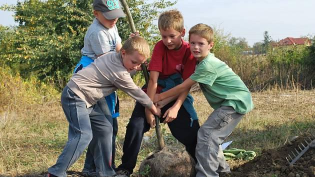 Vysazování stromů je jednou z aktivit, kterou Nadace Partnerství dlouhodobě podporuje.