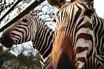 Zoo v Ústí nad Labem musí být kvůli opatřením proti šíření koronaviru uzavřena.