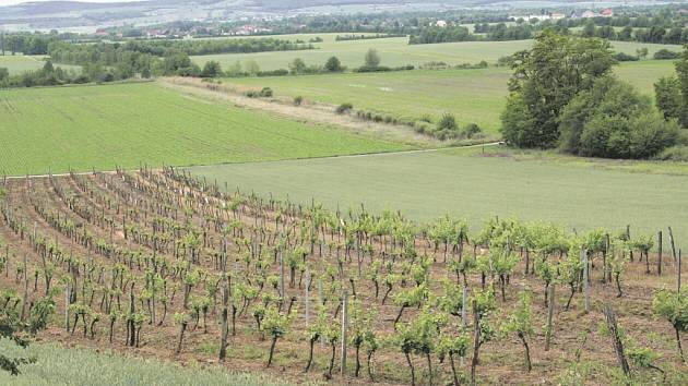 Rovina, pahorky a vinice, typický Weinviertel.
