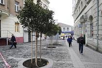 Během 60 minut vyrostly v ústecké uličce V Jirchářích v centru města několikaleté stromy.