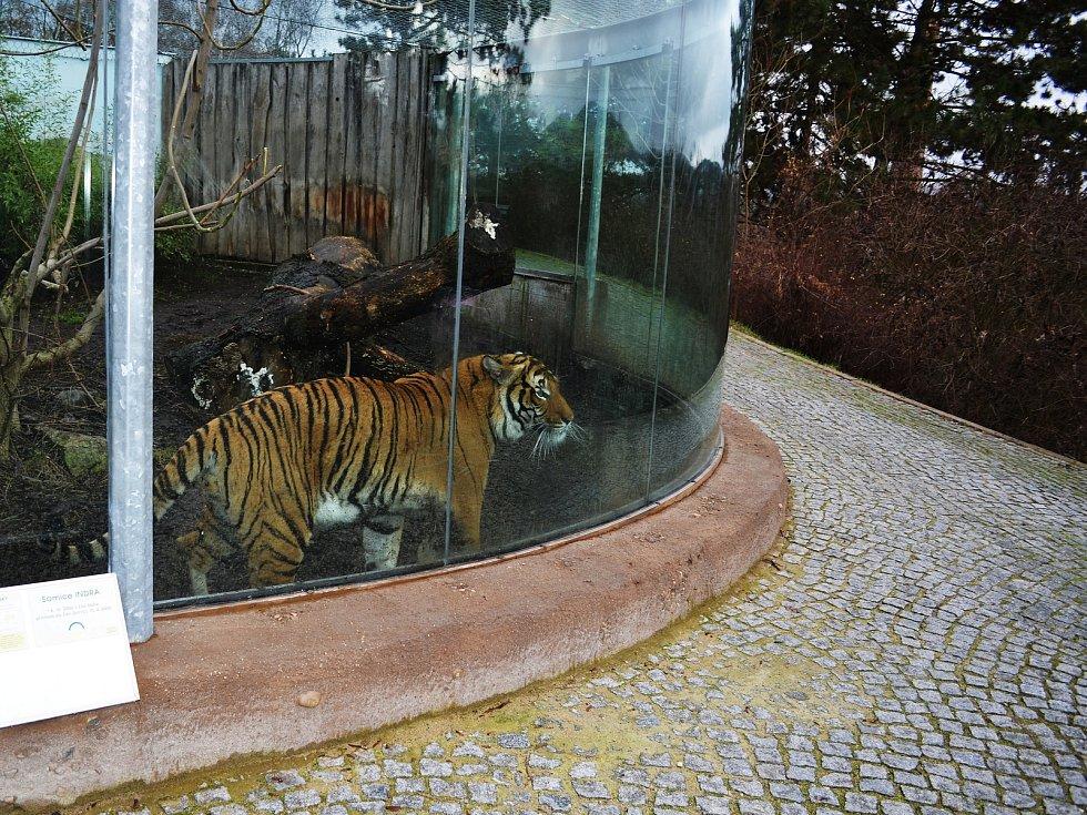Ústecká zoo je kvůli opatřením proti šíření koronaviru uzavřena.
