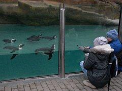 Ústecká zoo zve na pololetní prázdniny s tučňáky.