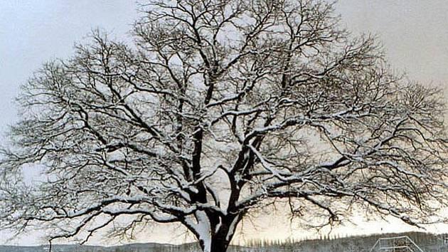 Soutěž o Strom roku...