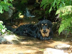 Koupání v přírodě je přirozený způsob ochlazení psa v parném létě. Ilustrační foto.