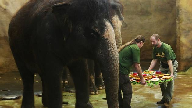 Třicet let od svého příchodu do ústecké zoo oslavila slonice Kala.