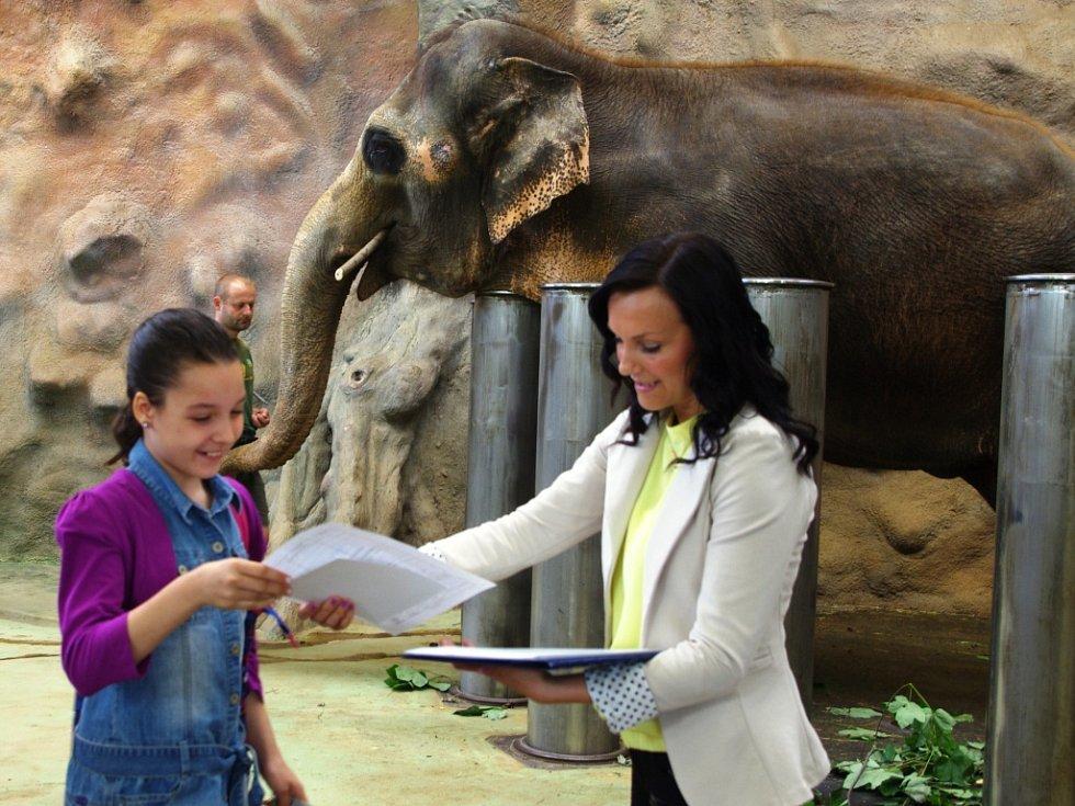 Vysvědčení v pavilonu slonů dostali žáci ze Základní školy Anežky České.
