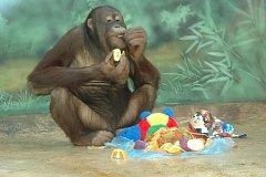 Ámos dostal od ošetřovatelů na rozloučenou ovocný dort.