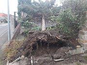 Spadlý strom - Ústí nad Labem - Štursova ulice - Bukov