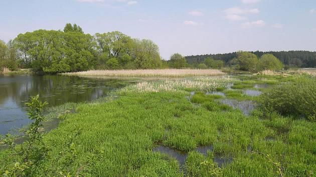 Kampaň má podpořit projekty zaměřené například na proměnu nepropustných ploch na zelené nebo na obnovu mokřadů.