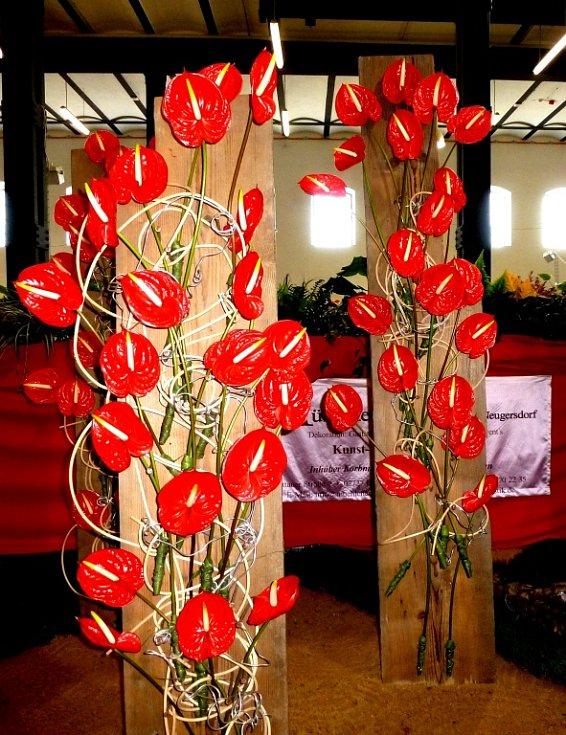 Od srpna lze na výstavě vidět nejrozmanitější teplomilné květy a expozici kaktusů.