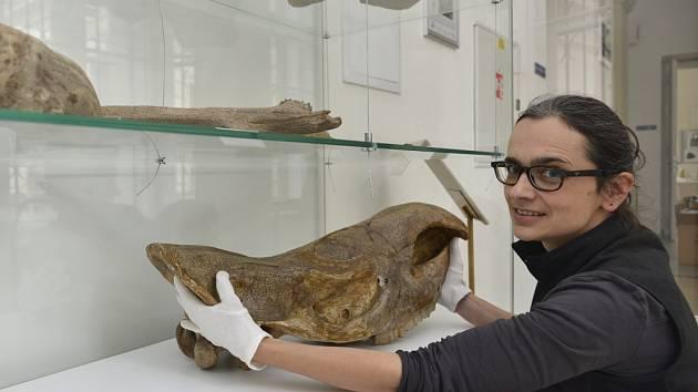 Pozůstatky zvířat jsou exponátem měsíce v ústeckém muzeu.