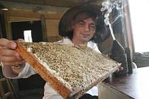 V bílém plášti a se slamákem s kuklou jsem s včelařkou Marií Seidlovou ze Lhoty na Žatecku vstoupil do úlu mezi tisícovku včel. Ty Marie chová na své zahradě. Vybaven kuřákem jsem se cítil mnohem bezpečněji.
