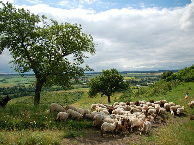 Území Blšanský Chlum je jedinečným biotopem, který oceňují přírodovědci i jeho běžní návštěvníci.