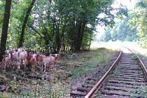 Kozy na Kozí dráze. Úsek z Telnice do Oldřichova je mimo provoz od roku 2009.