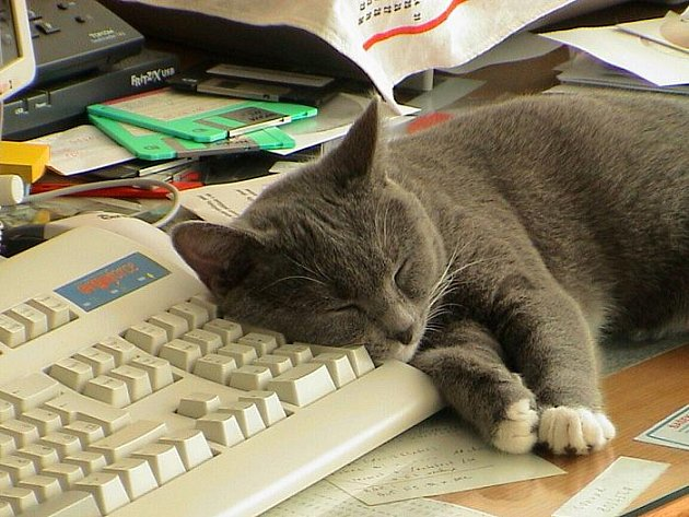 Je velmi přítulný a svým pánečkům pomáhá, jak může ... i s obsluhou PC.