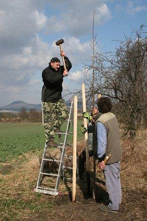 Podzimní výsadba stromů každoročně přivede ke spolupráci lidi různých profesí a věku, kterým není lhostejné, jak okolí jejich bydliště vypadá. Ilustrační foto.