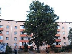 Celkem devět stromů má padnout za oběť rekonstrukci kanalizace a vodovodu v ústecké Klíšské ulici.