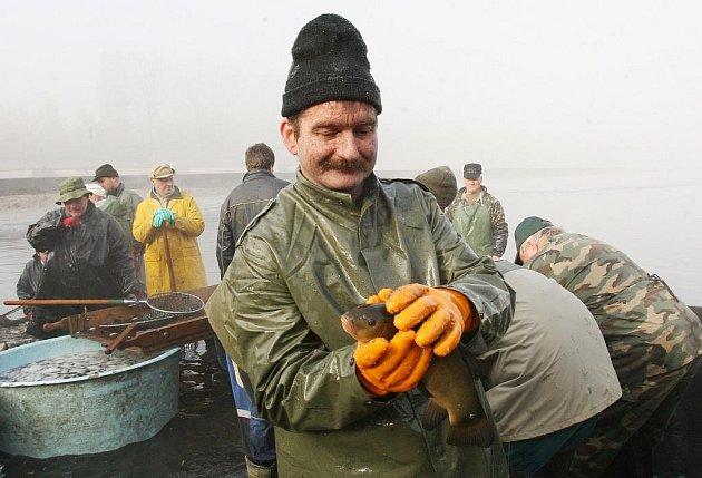 Rybáři měli v pátek výlov Habrovického rybníka.