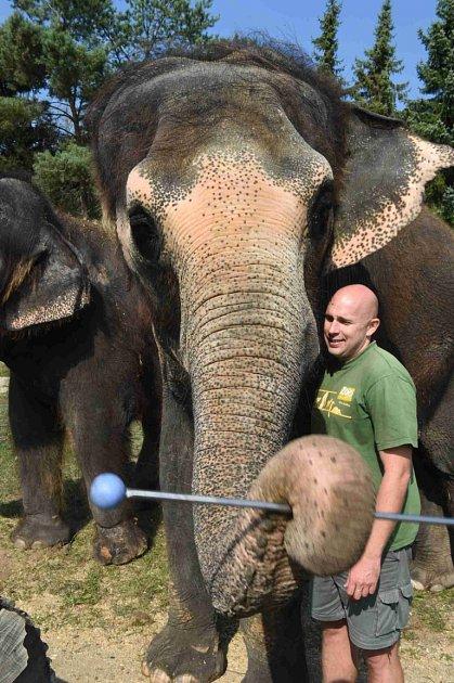 Slonice mohou vústecké zoo nově cvičit hru na xylofon a zvonkohru.