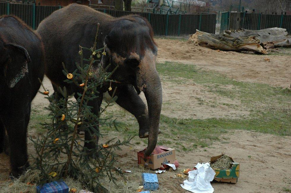 Vánoční nadílka v ústecké zoo