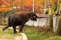 """Také vás barevný podzim inspiruje k fotografování? Našeho spolupracovníka Miroslava Vlacha ano, proto pořídil tuto krásnou fotografii v ústecké zoo. """"Bylo to kouzlo okamžiku, prostě jsem byl ve správnou dobu na správném místě,"""" usmál se fotograf Vlach."""