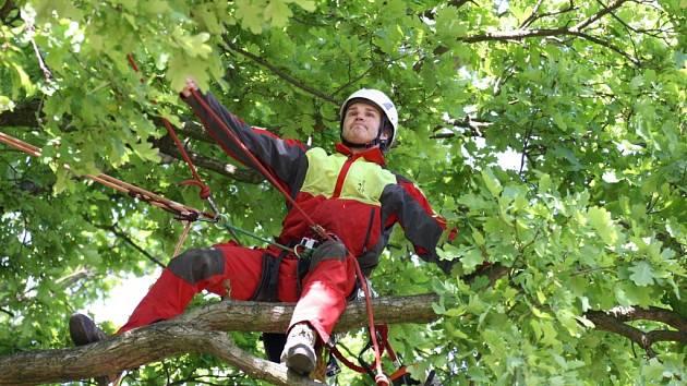 Vítězný strom kromě titulu Strom roku navíc získá poukaz na arboristické ošetření.