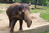 Sloní den v ústecké zoo.